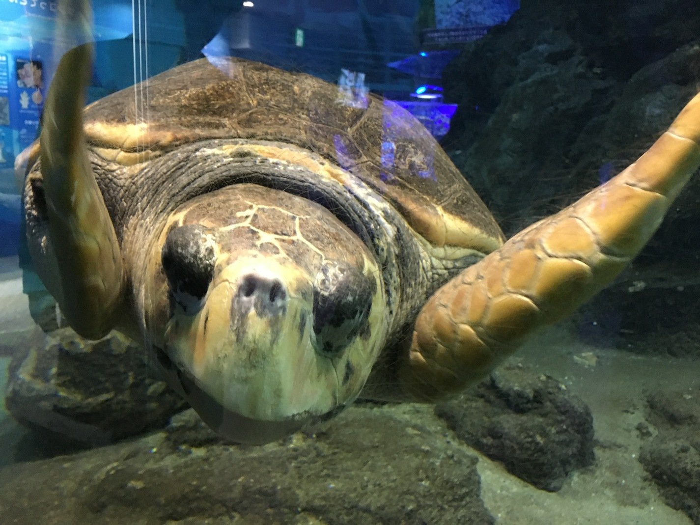 Sea Turtle of Port of Nagoya Public Aquarium
