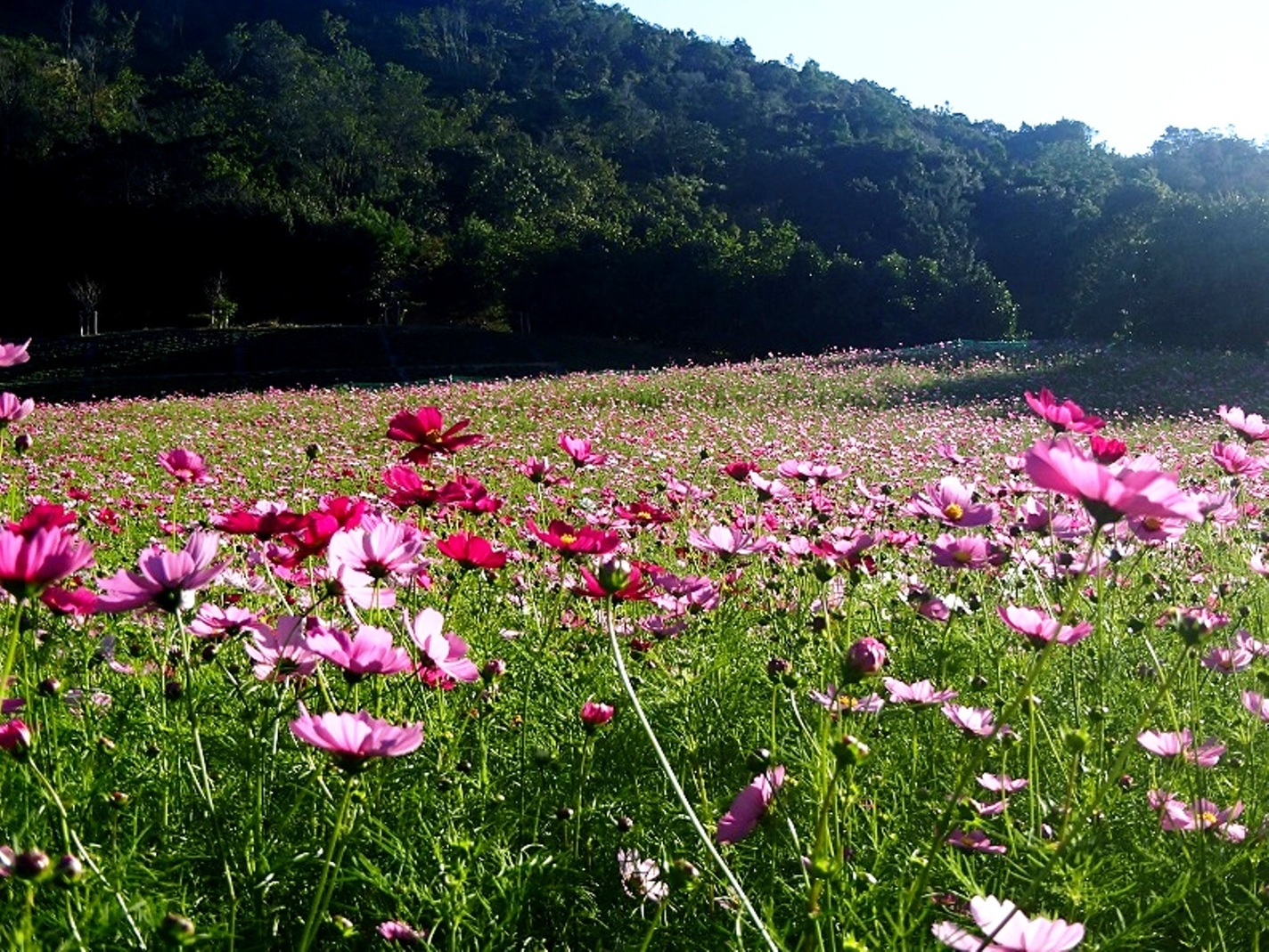 Shima Tourist Farm