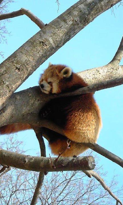 Chausuyama zoo