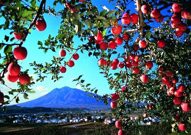 Mt. Iwaki and Apples