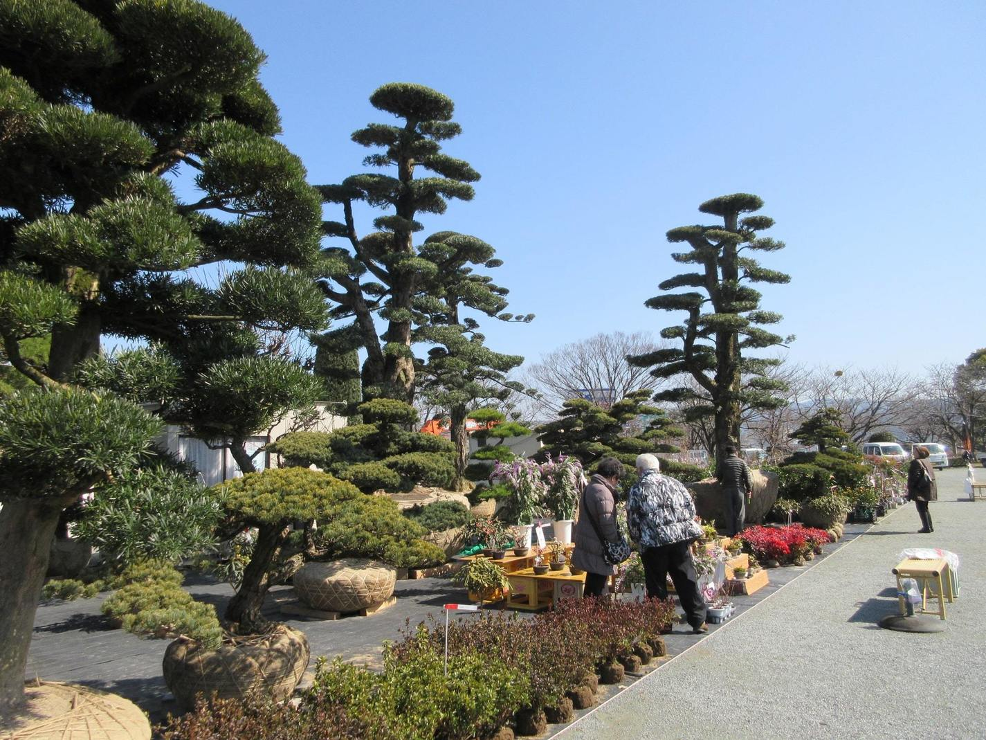 Kurume Garden Plant Market
