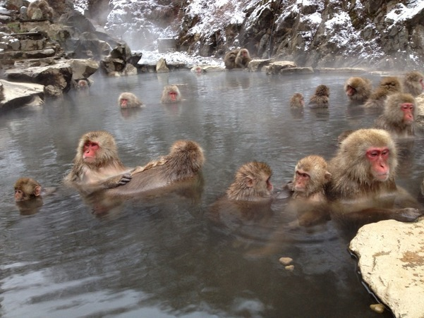 Jigokudani Monkey Park in Winter