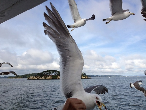 Gull of Matsushima