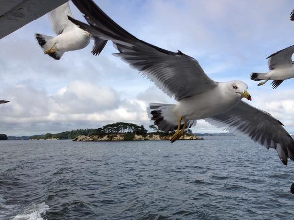 Gull of Matsushima 2