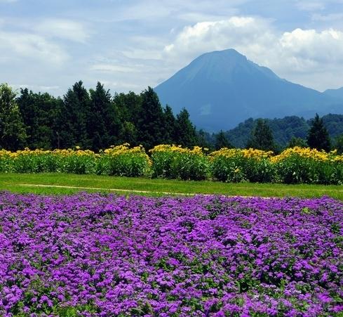 Tottori flower corridor