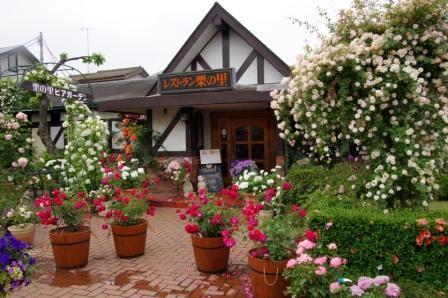 Limited company   Saso plantation   Restaurant   C