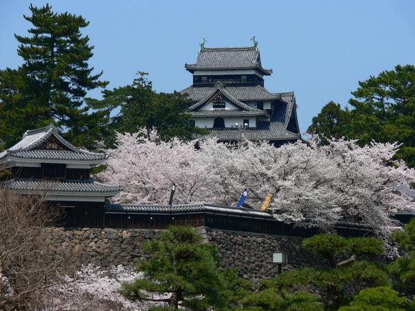 Matsue Castle(Spring)