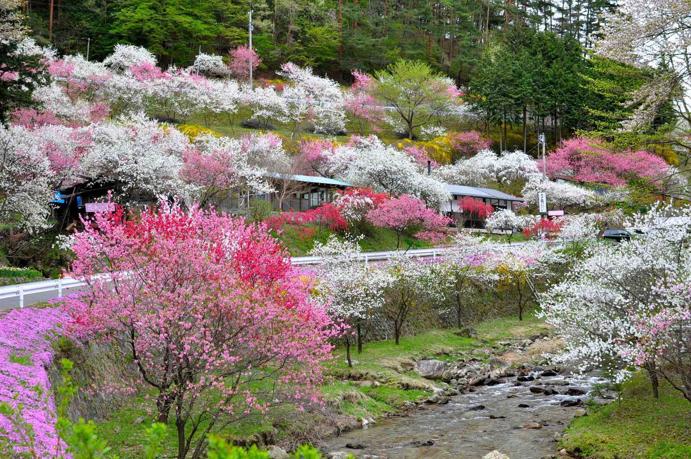Village of Peach Flower(in Nakazawa District)