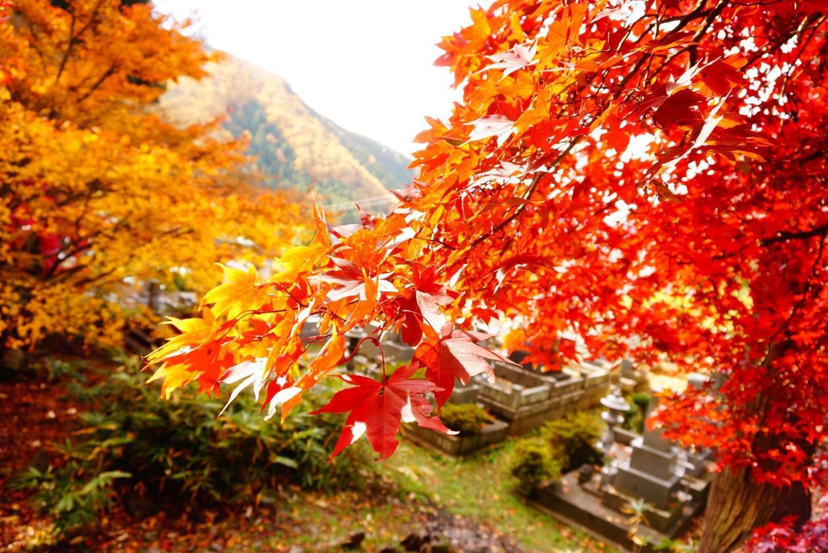 Amidasan Seisuiji Temple
