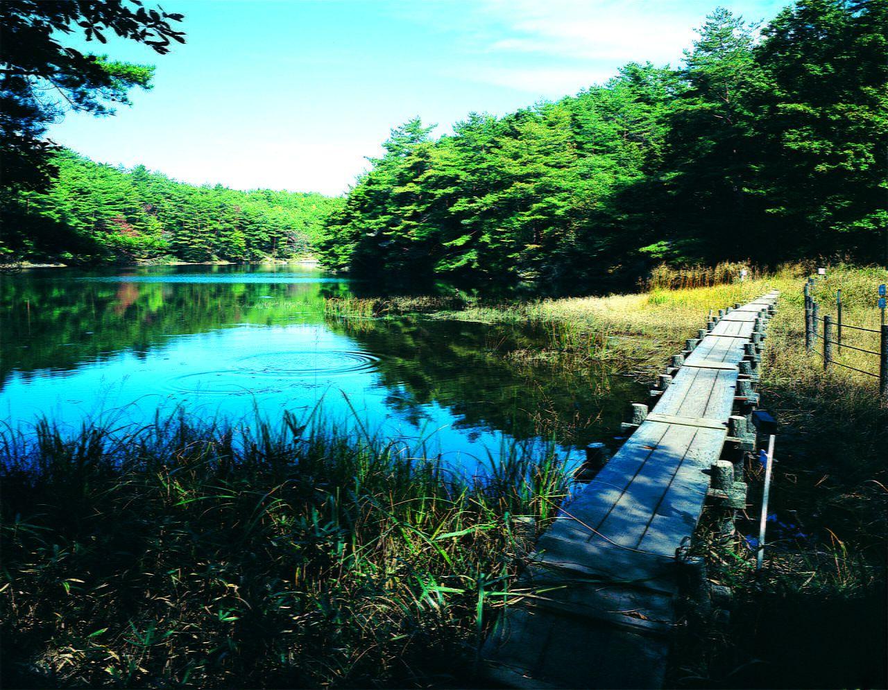 Koigakubo Wetland